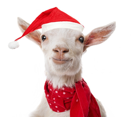goat head: funny goat with a red santa cap