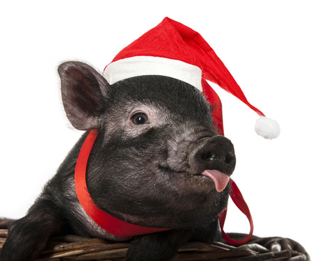 a cute little pig with santa cap sitting in a basket