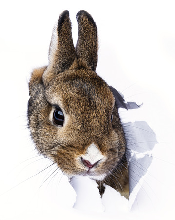 baby rabbit looks through a hole in a paper photo