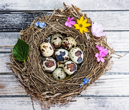 a little nest with eggs on a wooden table - easter still life photo