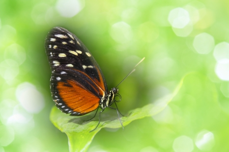an orange tropical butterfly sitting on a leaf photo