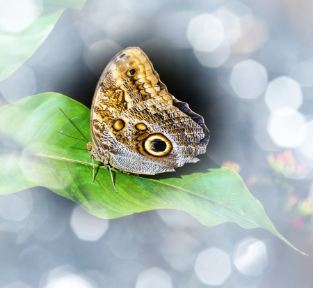 a brown tropical butterfly sitting on a green leaf photo