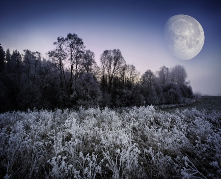 fogy winter morning - frozen landscape and moon photo