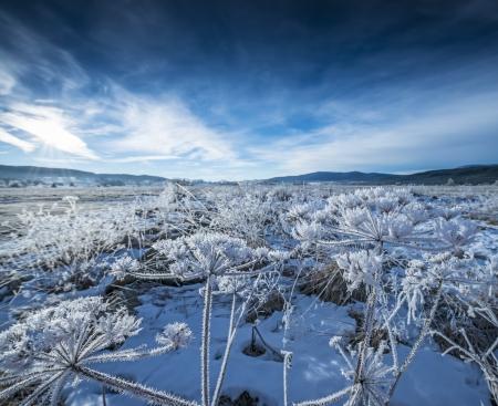 frozen landscape photo