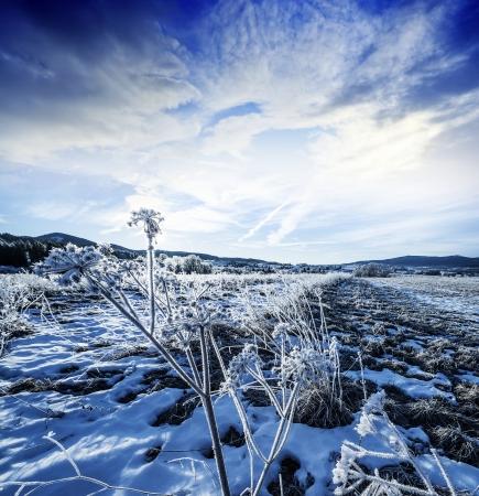 winter landscape with frozen plants photo