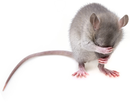 少しマウス hidingher 銃口