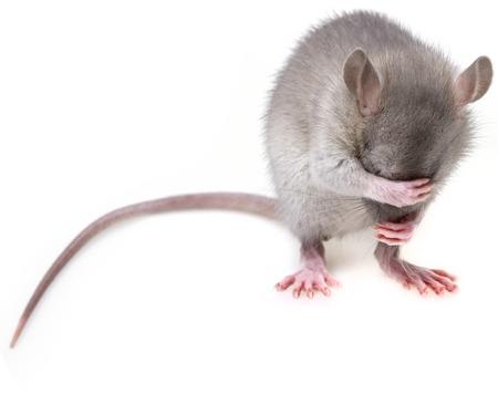 little mouse hidingher muzzle Reklamní fotografie - 25868916