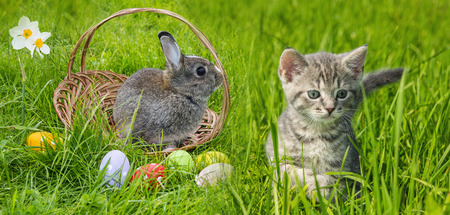 a cute easter rabbit and kitten photo