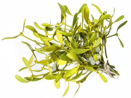 mistletoe isolated on a white