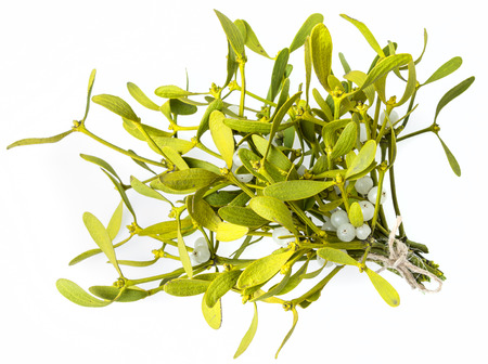 mistletoe isolated on a white