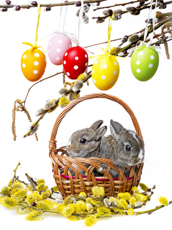 two little rabbits in a basket and spring branch photo