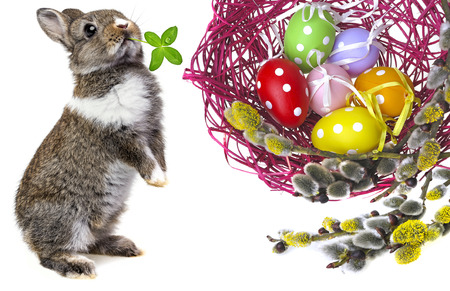 easter eggs in a nest and easter rabbit photo