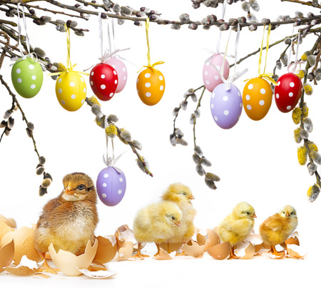 newborn chickens and easter eggs photo