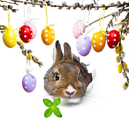 rabbit and easter eggs photo
