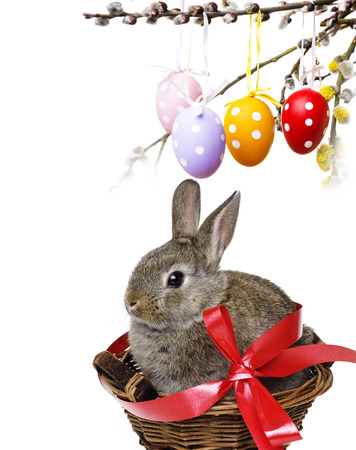 little cute easter rabbit in a basket photo