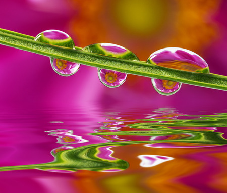flower mirroring in rain drops - macro photo
