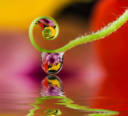 flower and dew drops Stock Photo
