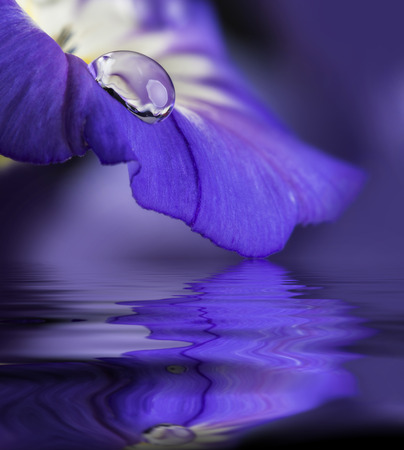 blue flower with a dew drop photo