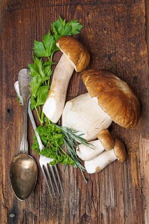 fungous: mushrooms - Boletus edulis