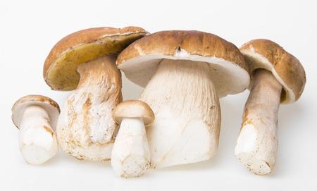 edulis: mushrooms - Boletus edulis