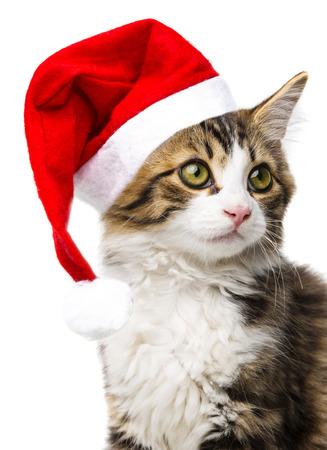 cat with santa cap photo