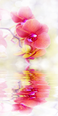 orange orchid close up photo