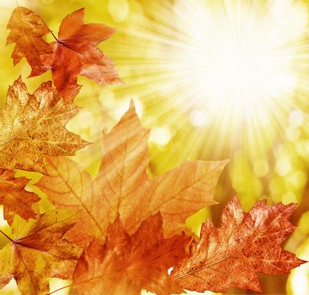 fall leaves  Standard-Bild
