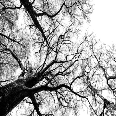 arboles blanco y negro: árboles
