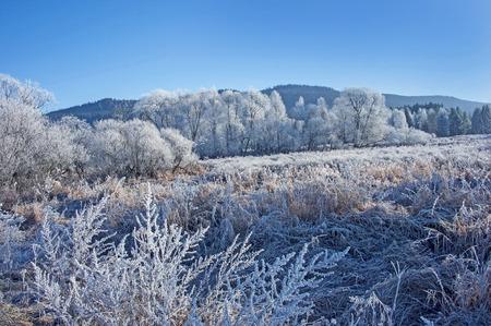 a frozen winter landscape photo
