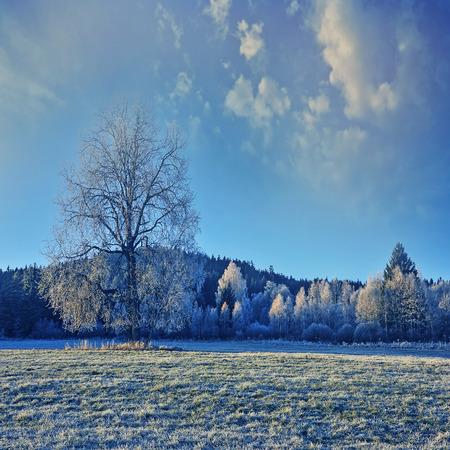 beautiful winter in morning photo