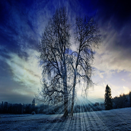 a winter morning with a beautiful sunrise photo