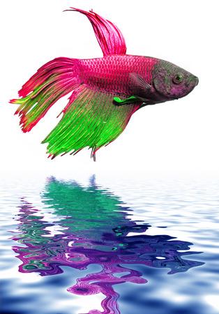 aquarium hobby: little fish
