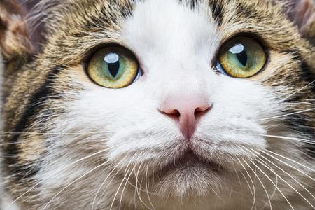 a cat portrait close up photo