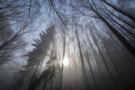 autumn forest: un bosco in autunno e nebbia
