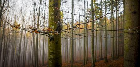 autumn forest: una foresta di autunno e nebbia
