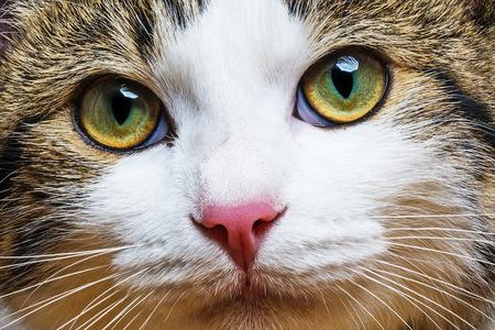 猫の肖像画をクローズ アップ