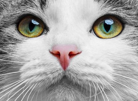 a green cat eyes close up photo