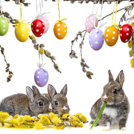 two little rabbits and spring flowering branch photo