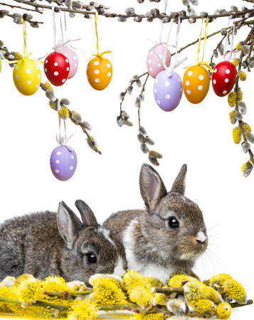 two little rabbits and spring branch photo