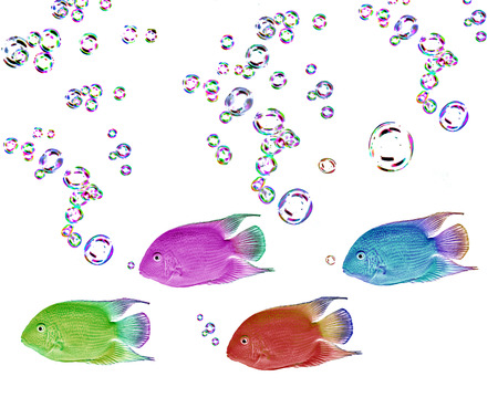 heros: colored fish on black background