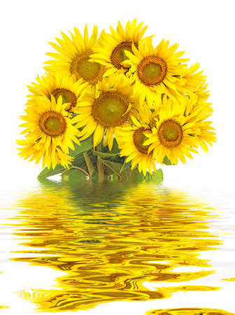 bunch of: a big bunch of sunflowers in a vase