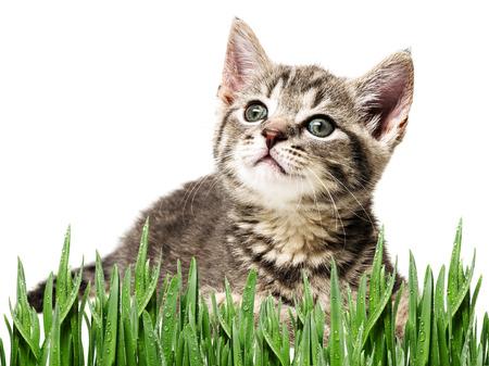 frisky: a cute little kitten Stock Photo