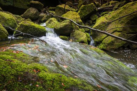 czech switzerland: fiume nella foresta - Svizzera Ceca saxon