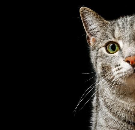 green cat eyes Standard-Bild