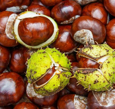 horse chestnut seed: chestnuts  - autumnal still life