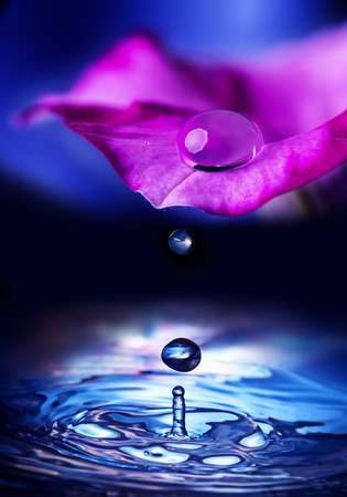 flower petal with drop