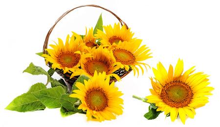 girasol: ramo de girasoles en una cesta
