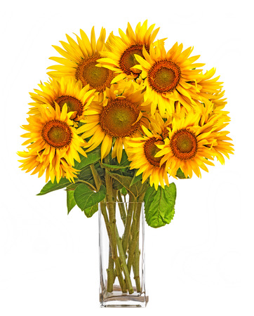 campo de flores: un gran ramo de girasoles en un jarr�n Foto de archivo
