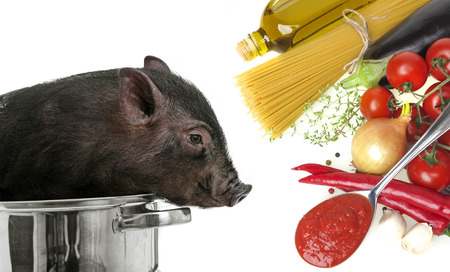 to be or not be: a pig in a pot -  be vegetarian or not Stock Photo