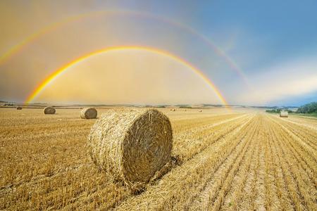 虹とフィールド期日収穫 写真素材